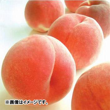 <新潟県産>白根白桃「新潟みらい一糖賞」(6~7玉)2kg