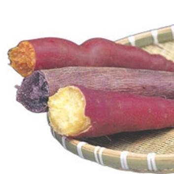 <木内農園>なるとの金太郎と二色の芋5kg