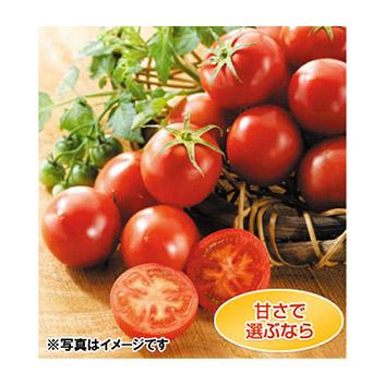 <高知県産>徳谷トマト【生産者52番】