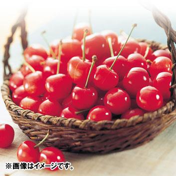 <山形県産>押野農園 山形美人(PVP)秀L玉(鏡詰め)1kg