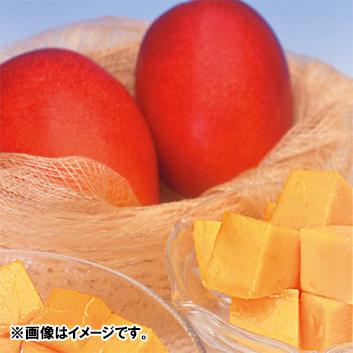 <宮崎県産>完熟マンゴー「太陽のタマゴ」 1kg