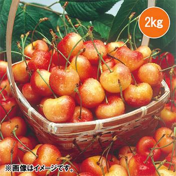 <オービル農園>大粒特選アメリカンチェリー(レーニア種)2kg