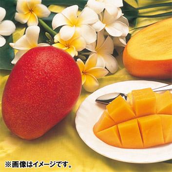 <沖縄県産>ファイン紅マンゴー秀品(2~3玉)