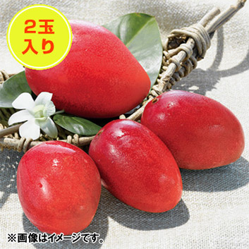 <宮崎西都産>完熟マンゴー(2玉)