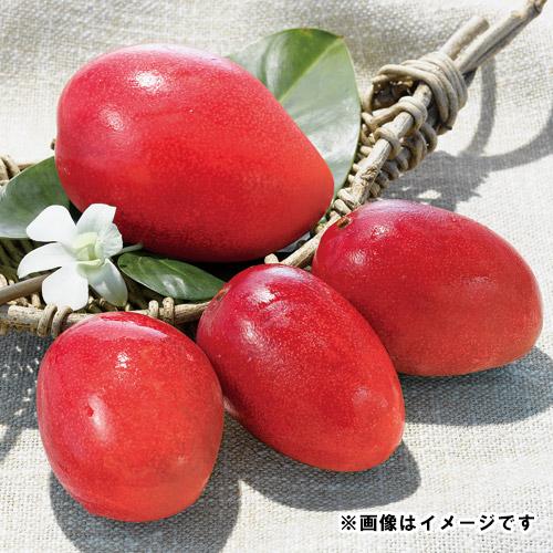 <宮崎西都産>完熟マンゴー(大玉1玉)