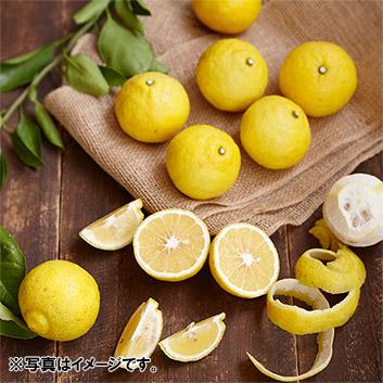 <熊本県宇城市産>吉田果樹園「 はるか」 5kg