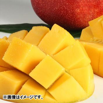 【母の日】<数量限定>宮崎県産完熟マンゴー ※送料込
