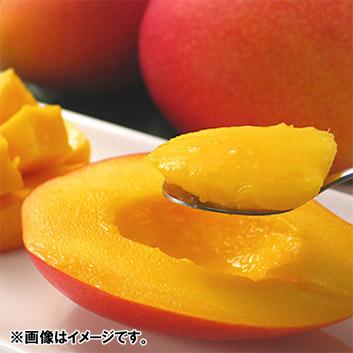 <石垣島産>アップルマンゴー(2~3玉)1kg