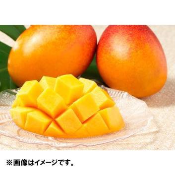 <宮古島産>訳ありマンゴー(2~3玉)700g