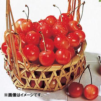 <北海道産>山本果樹園 紅秀峰秀L玉(バラ詰)1kg