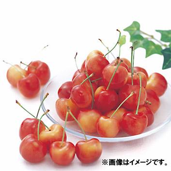 <山形県産>天香園 佐藤錦 優秀混L・2L(バラ詰) 1kg