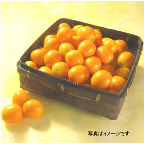 <宮崎県産>金柑「たまたま」 1kg