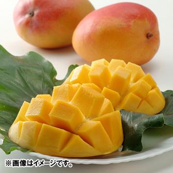 <メキシコ産>エア便マンゴー(7玉前後)4.2kg