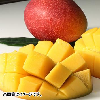 <宮崎県産>完熟マンゴー(2玉)1.1kg