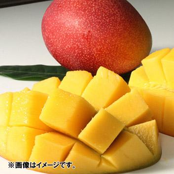 <宮崎県産>完熟マンゴー(4玉)1.8kg
