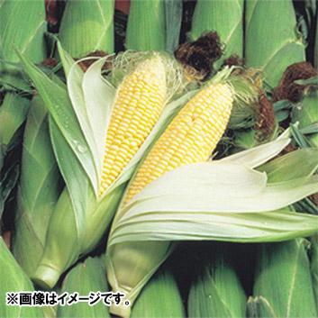 <北海道産>とうもろこし サニーショコラ(10本)<br>計3.5kg