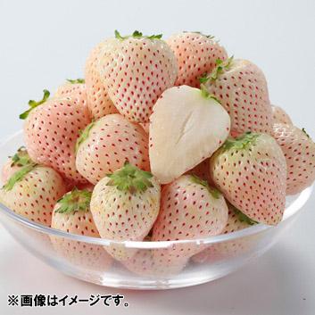 <熊本県産>白いイチゴ「あその小雪」