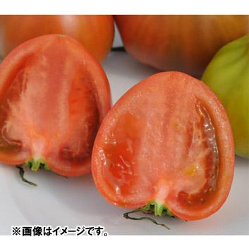 <宮崎県産>食匠倶楽部 MIYAZAKI 熟光トマト 1kg(10~16玉)