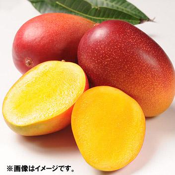 <食匠倶楽部>MIYAZAKI 宮崎マンゴー熟光の華(2L×2玉)