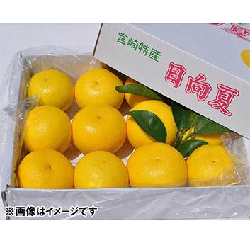 <宮崎県>日向夏2.5kg(種あり)
