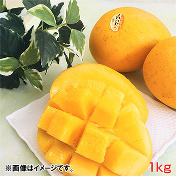 <沖縄県産>金蜜マンゴー秀品1kg