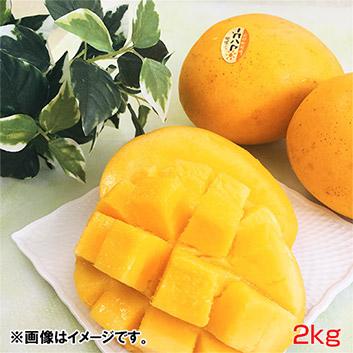 <沖縄県産>金蜜マンゴー秀品2kg