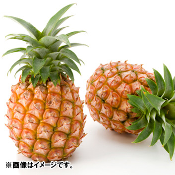 沖縄県産ピーチパイン3玉