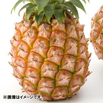 沖縄県産ハワイ種パイン3玉