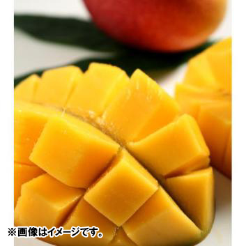 沖縄県長嶺農園別格「林檎」マンゴー1kg(2~3玉)