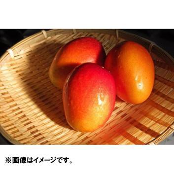 琉球列島3島食べ比べマンゴーセット 1.5kg