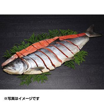 「銀聖」 鮭 一尾