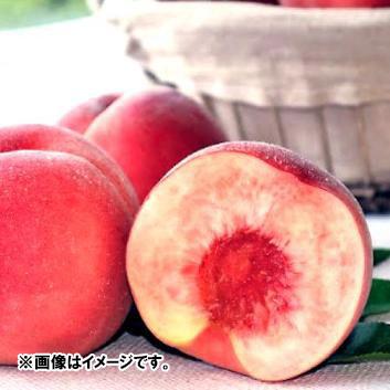 【人気急上昇!!】<br>鷲農園グループ  山形県産もも「陽夏妃」1.4㎏(4~7玉)