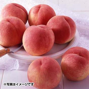 和歌山県産 桃 (5~7玉)
