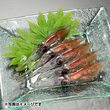 <川村水産>ほたるいか昆布〆刺身
