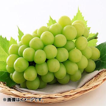 <岡山県産>シャインマスカット「晴王」700g 1房