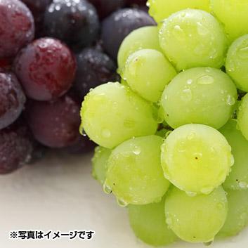 山形県産ぶどう食べくらべ(ピオーネ・ロザリオビアンコ)1kg