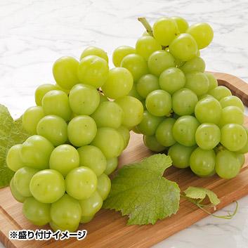<長野県産>関野農園シャインマスカット1kg(2~3房)