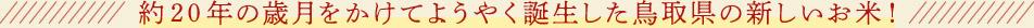 約20年の歳月をかけてようやく誕生した鳥取県の新しいお米!